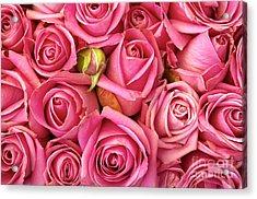 Bed Of Roses Acrylic Print by Carlos Caetano