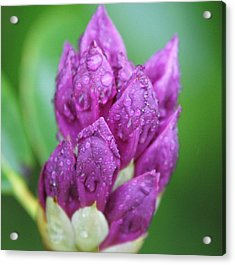 Acrylic Print featuring the photograph Bedazzled by Alex Grichenko