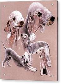 Bedlington Terrier Acrylic Print