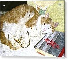 Bedtime Cat Acrylic Print by Susan Leggett
