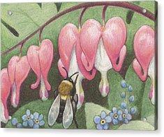 Bee And Bleeding Heart Acrylic Print by Amy S Turner
