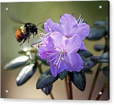 Acrylic Print featuring the photograph Bee And Bob's Blue by Chris Anderson