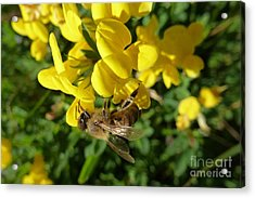 Bee And Broom In Bloom Acrylic Print
