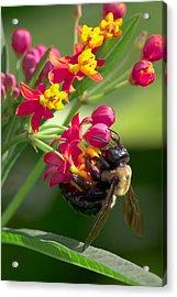 Bee And Flowers Acrylic Print by E Mac MacKay