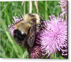 Bee Acrylic Print by Angela Christine
