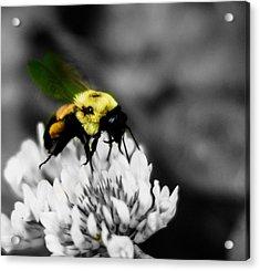 Bee Bee Acrylic Print
