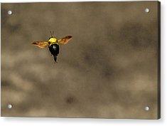 Bee Dance Acrylic Print
