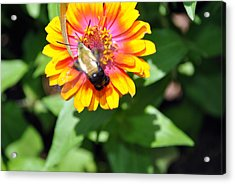 Bee Easy Acrylic Print by Dion Baker