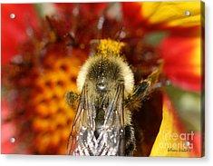 Bee Five - Acrylic Print by Silvana Siudut