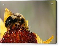 Bee Four Acrylic Print by Silvana Siudut