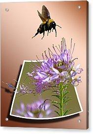 Bee Free Acrylic Print