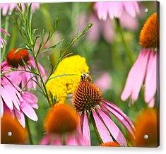 Bee Gone Acrylic Print by Robert Joseph