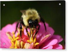 Bee Good Acrylic Print by Annie Babineau