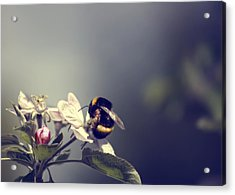 Bee Happy Acrylic Print by Gabriel Calahorra
