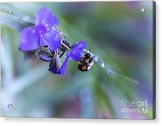 Bee Harmony Acrylic Print