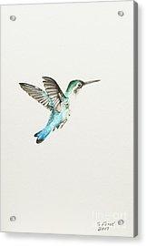 Bee Hummingbird Acrylic Print