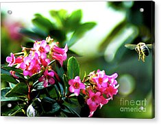 Acrylic Print featuring the photograph Bee In Flight by Micah May