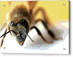 Acrylic Print featuring the photograph Bee In Macro 5 by Micah May
