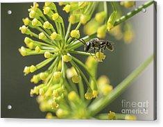 Bee Acrylic Print by Jivko Nakev
