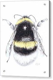 Bee Acrylic Print by Katy Scott Ricketts