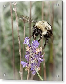 Acrylic Print featuring the photograph Bee Lands On Lavender by Len Romanick