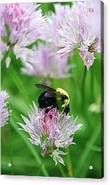Bee Acrylic Print by Melanie Beasley