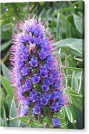Bee On Blue Acrylic Print