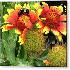 Bee On Colorful Flowers Acrylic Print