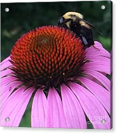 Bee On Flower By Saribelle Rodriguez Acrylic Print