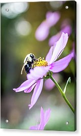 Bee On Flower Acrylic Print