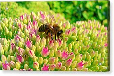 Acrylic Print featuring the photograph Bee On Flower by Larry Keahey