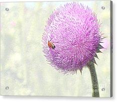 Bee On Giant Thistle Acrylic Print