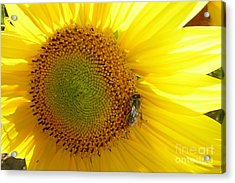 Acrylic Print featuring the photograph Bee On Sunflower by Jean Bernard Roussilhe