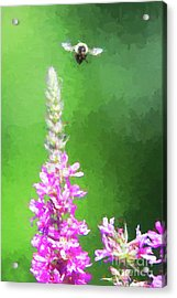 Bee Over Flowers Acrylic Print