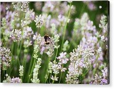 Bee Pollen Acrylic Print