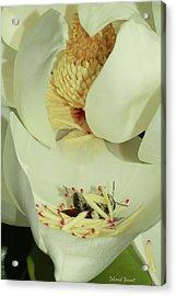 Bee Pollen Overdose Acrylic Print by Deborah Benoit