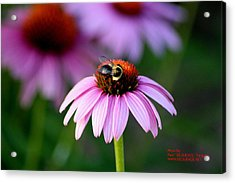Bee Right Acrylic Print by Paul SEQUENCE Ferguson             sequence dot net