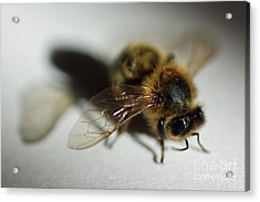 Bee Sitting On A White Sheet Acrylic Print by Sami Sarkis
