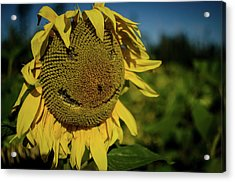 Bee Smiling Sunflowers Acrylic Print