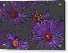 Bee With Asters On Gray Acrylic Print by ShaddowCat Arts - Sherry