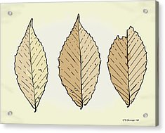 Beech Leaf Illustration Acrylic Print by Jamie Jorgensen