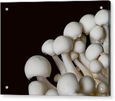 Beech Mushrooms Acrylic Print