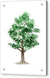 Beech Tree Minimalist Watercolor Painting Acrylic Print by Joanna Szmerdt