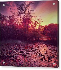 #beechforest #provincetown #sunset Acrylic Print by Ben Berry