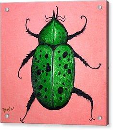 Beedles - George Acrylic Print