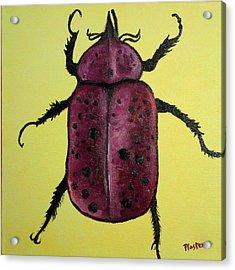 Beedles - Ringo Acrylic Print