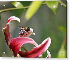 Beeing Acrylic Print by Ron Plasencia