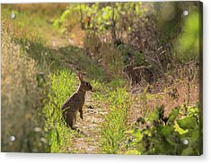 Been Spotted Acrylic Print