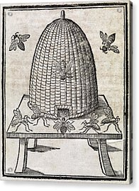 Bees And Beehive, 17th Century Artwork Acrylic Print by Middle Temple Library