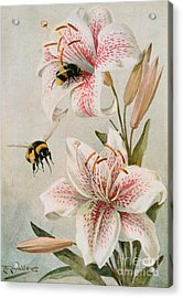 Bees And Lilies Acrylic Print by Louis Fairfax Muckley